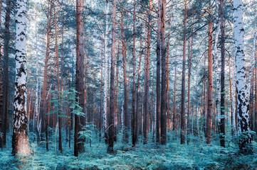 Forest landscape, soft filter