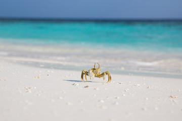 Small crab on the beach , Maldives