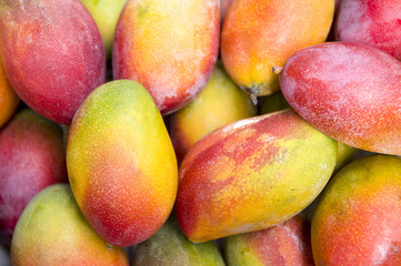 Fresh colorful tropical mangoes on display at outdoor farmers market in Rio de Janeiro Brazil