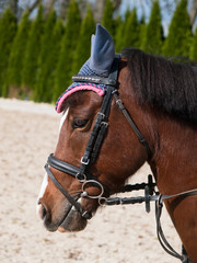 Portrait of sport pony with bridle