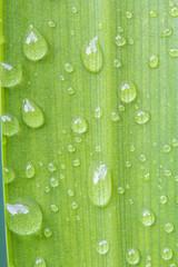 gouttes d'eau sur feuille de dracaena