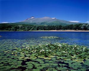 大沼と駒ケ岳