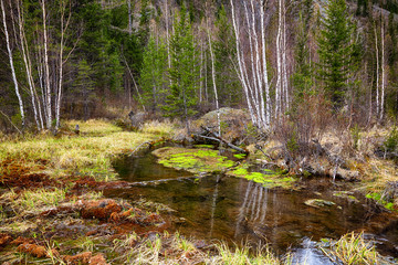 Swampy stream in Altay Taiga