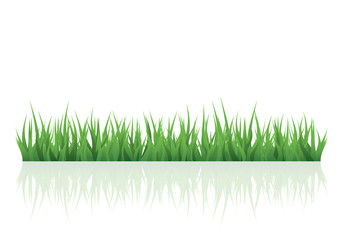 Vector green grass for your project
