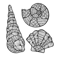 Stylized vector shell, zentangle
