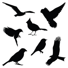 bird silhouette illustration set