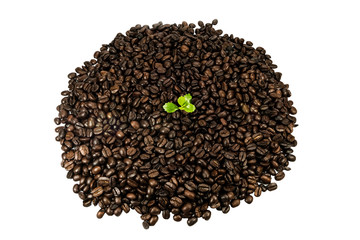 Green seedling in coffee beans isolated on white background