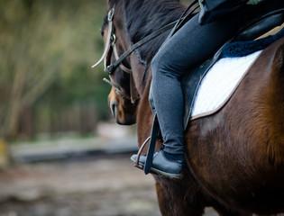 Papiers peints Equitation Rider on a horse