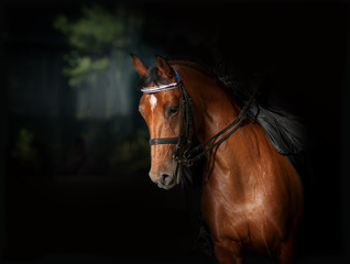 Sport dressage horse in dark manege