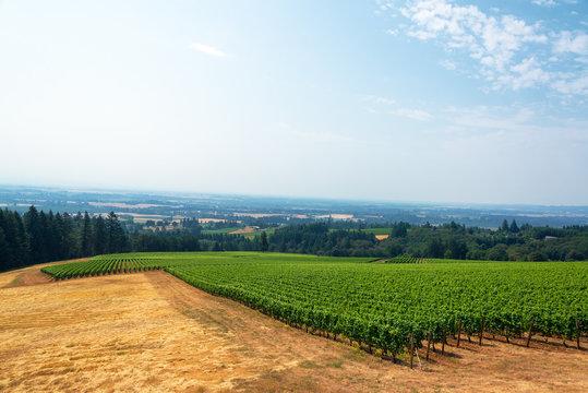 Vineyard and Willamette Valley