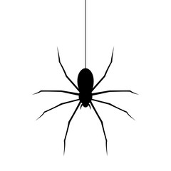Spider black icon