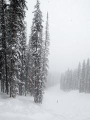 Powder day at Purgatory ski area in Durango, Colorado
