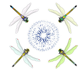 Four dragonflies flying on an abstract flower on a white background