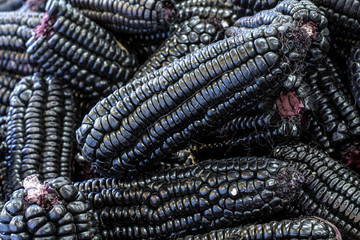 Peruvian purple corn, used to prepare juice (chicha).