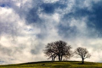 zwei Bäume im Sonnenschein