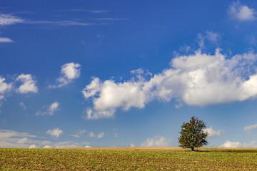 Baum auf dem Acker mit blauem himmel und Sonnenschein