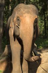 Chiang Mai elephant camp