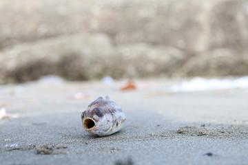 Dead fish on the beach.
