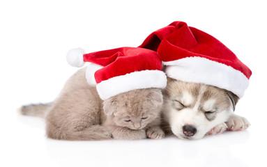 sleeping scottish kitten and Siberian Husky puppy with santa hat