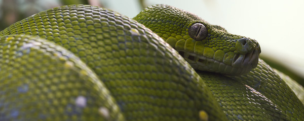 green tree snake closeup
