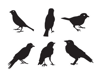 Birds Silhouettes Isolated on White Vector Illustration