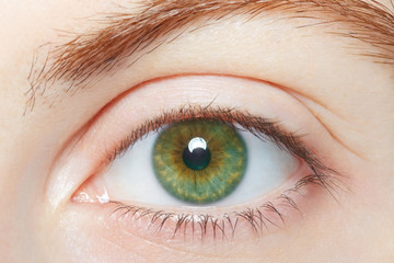 Human, green healthy eye macro