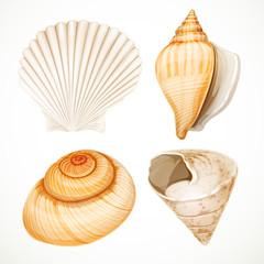 Set realistic seashells isolated on white background