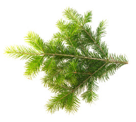 Fir branch on a white background for your design