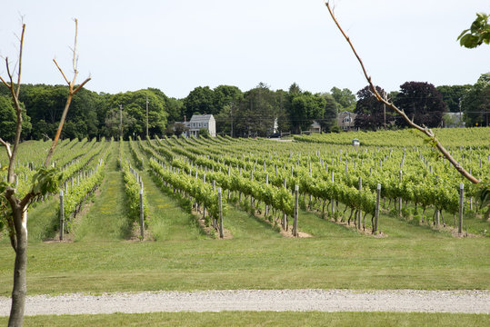 kon to KOS ta Winery at Greenport Long Island USA
