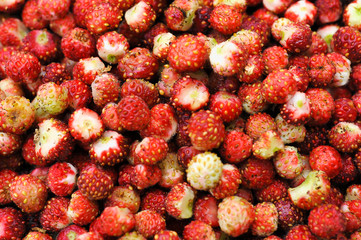 wild strawberries close up - background