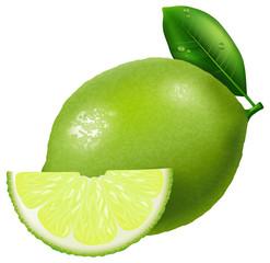Lime illustration.