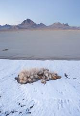 Vertical Sage Brush Frozen Ground Salt Flats Utah Desert