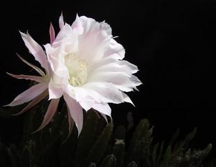 Fotobehang Flower