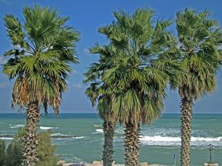 Palmen an der Adria