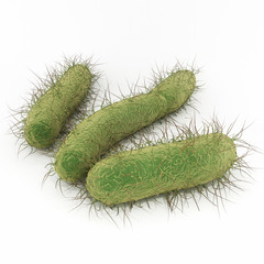 E. Coli Bacteria - An illustration of Escherichia coli (commonly abbreviated E. coli) is a rod-shaped bacterium of the genus Escherichia that can cause serious food poisoning in their hosts.