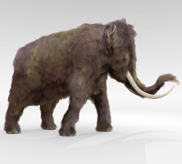 Woolly Mammoth - An illustration of the large extinct Woolly Mammoth.