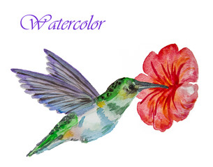 hummingbird flower on white background