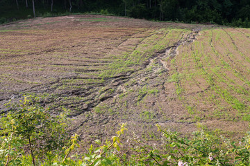 soil erosion on a cultivated field after heavy shower Wall mural