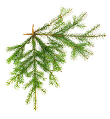 Two fir twigs at straight angle on white isolated