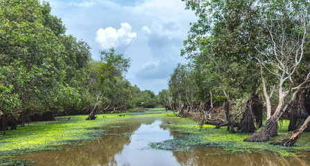 Tra Su cajeput forest, An Giang on summer evening with the fauna and flora abundance of mangroves, such as melaleuca, dirt, birds, fish, brackish water ecology .....