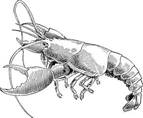 Lobster Vintage image