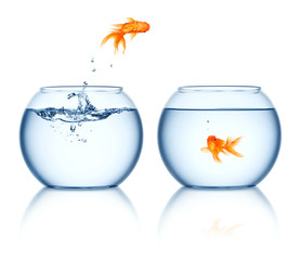 A goldfish jumping out of the fishbowl isolated on white background