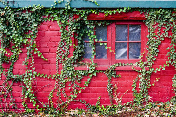 Red Wall with Green Ivy