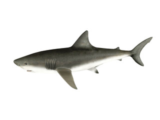 3D render shark isolated on white background