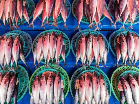 Rote Füsiliere auf dem Fischmarkt in Jagalchi in Busan