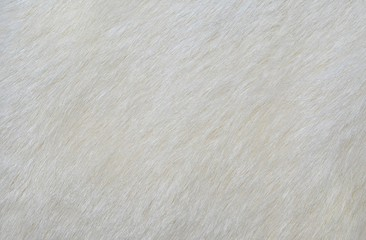 white fur texture background Wall mural