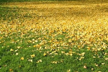 photos illustrations et vid 233 os de quot tapis de feuilles quot