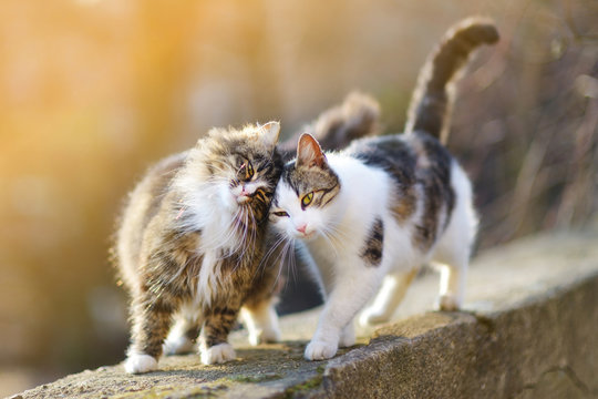 Two friendly cats