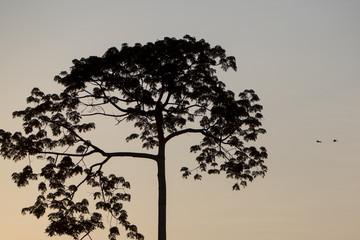 Backlit of tree on the Catatumbo River near the Maracaibo Lake.