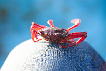 Crab on fishing boat on blue background